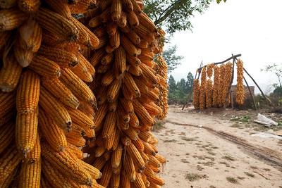 18. Drying Corn, Xiekou, Shaanxi