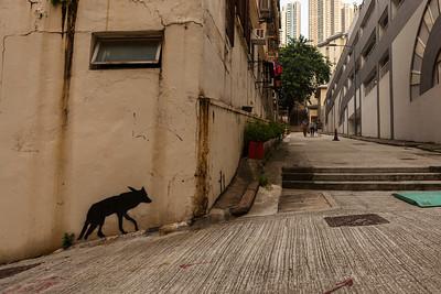 Urban Wolf, Po Yan Street, Hong Kong