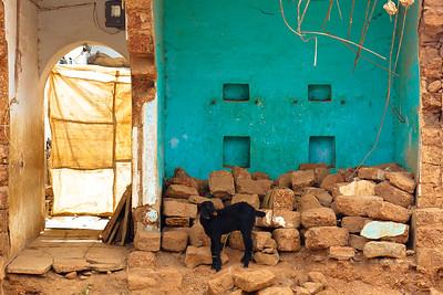 08IB497 Bidar Farming Goats Green India Karnataka