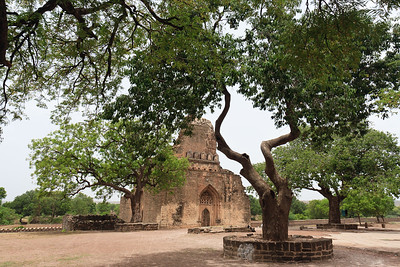 08IB480 Ashutur Tomb Bidar India Karnataka Tomb Tree