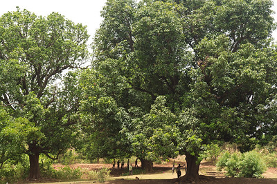 08IB481 Bidar Food India Karnataka Meals Picnic Tree