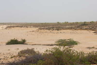 Landscapes of Kutch - Kutch, Gujrat, India
