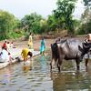 08IB080 Cattle Farmer India Kid Maharashtra Menavali Men