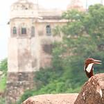 06IP443 Architecture Fort India Jaipur Nahagarh Rajasthan