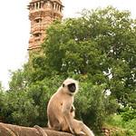 Click here to buy at Alamy. Keywords: Chittorgarh Hindu India Rajasthan Vijaya Stambha MyID: 06IP405
