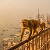 Balcony with monkey visitor
