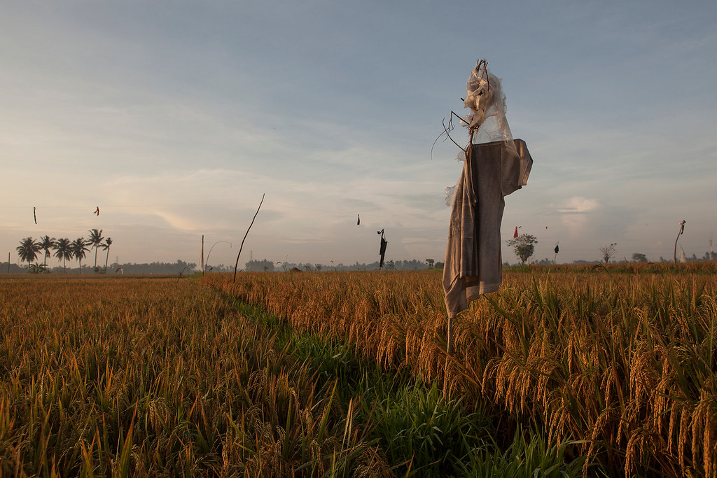Scarecrow, Lotunduh, Bali