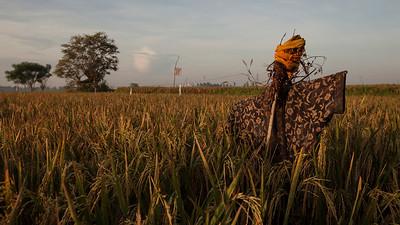 Scarecrow II, Lotunduh, Bali