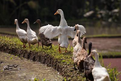 Bird Parade, Keliki, Bali