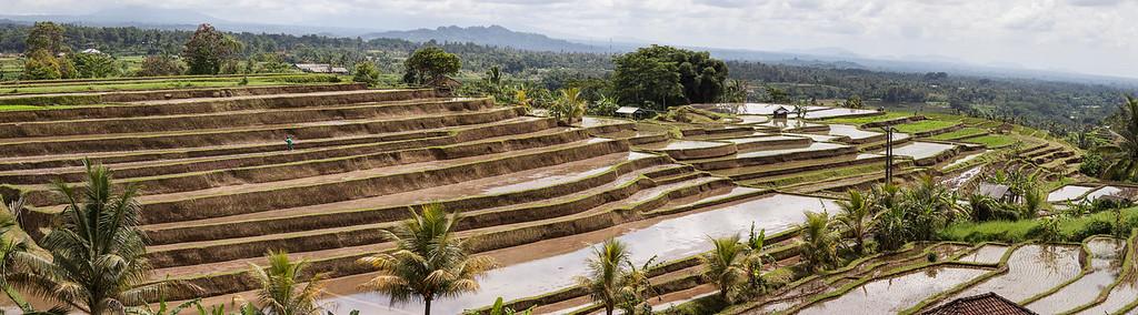 Jatiluwih Panorama, Central Bali