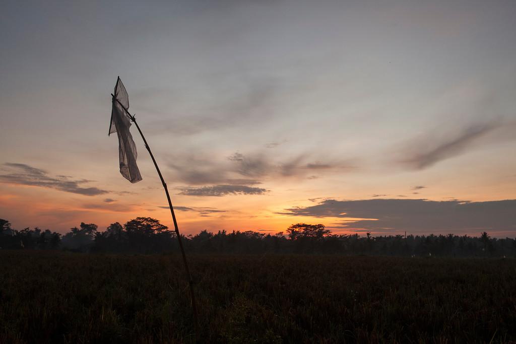 Dawn Surrender, Lotunduh, Bali