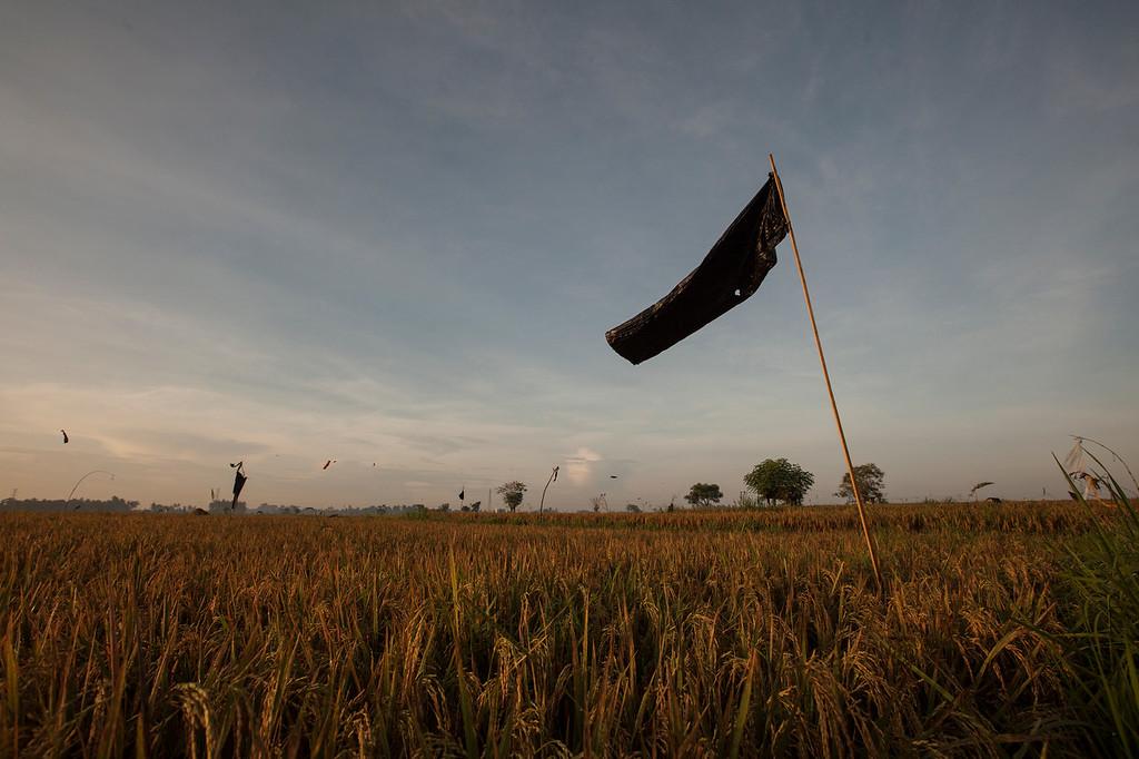 Black Flag, Lotunduh, Bali