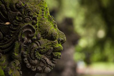 Moss, Goa Gajah, Bali