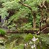 07JP305 Buddhism Garden Japan Kansai Kyoto Nanzenji Temple