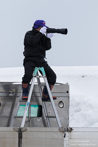 Guy photographing the vagrant Bufflehead - Rausu,  Hokkaido, Japan