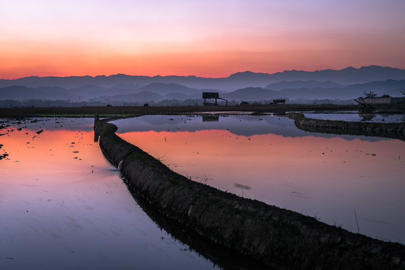 Sunset over flooded rice fields
