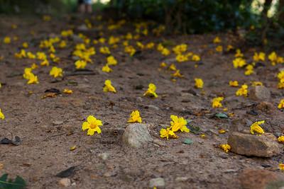 Fallen Blooms, Ella