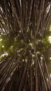 Bamboo Grove, Bhubhing Palace