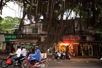 Banyan, Hanoi