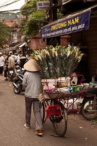 Lily, Hanoi