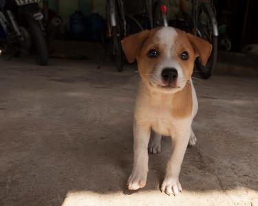 Puppy, Cam Kim