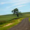 lone tree, palouse, wa