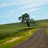 lone tree, palouse, wa