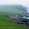 Puffin colony near Mykines village