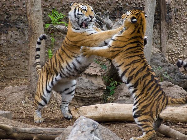 August 2011 Denver Zoo
