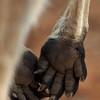 Kangaroo Paws.