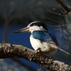 King Fisher.