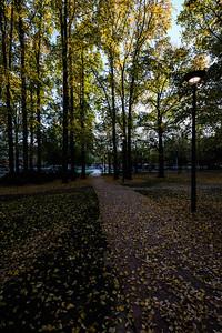 Glebe Park at sunrise.