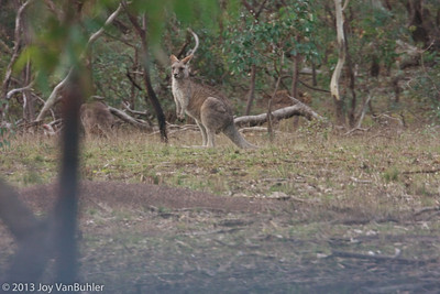 Mt. Ainslie Nature Park - Canberra, Australia