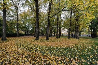 Autumn leaves in Glebe Park, just before sunrise.