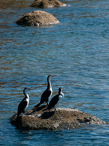 Three Shags