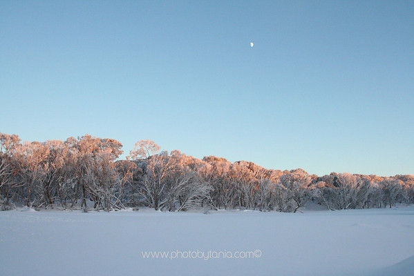 The morning after the snow storm. Dinner Plain, Mt Hotham, Victoria, Australia.