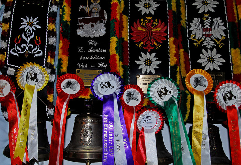 Swiss Cow Trophies and Ribbons - Ochsengarten, Austria