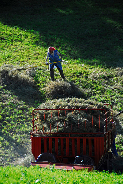 Woman raking hay - St. Sigmund, Austria