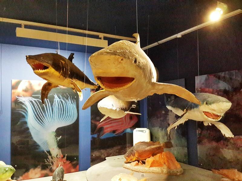 Ayia Napa museum