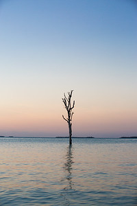 Lone Tree - Harbour Island, Bahamas - Tall Tree - Portrait - Pastel Sky