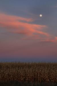moon above corn field