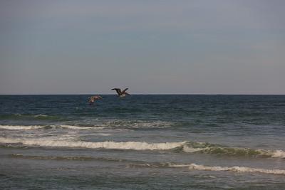 2014_10_24 Bald Head Island 029