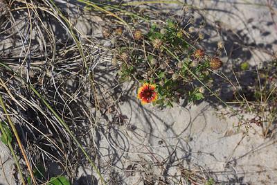 2014_10_24 Bald Head Island 034