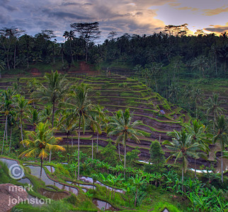 Terraced fields near Ubud at sunrise.