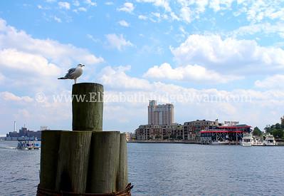 Inner Harbor, Baltimore, MD