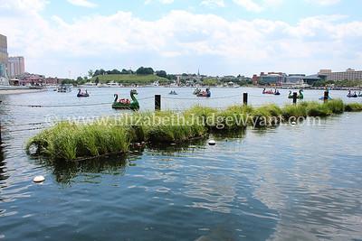 Floating wetlands, Inner Harbor, Baltimore, MD