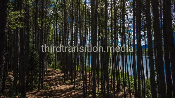 Lake Through Pines