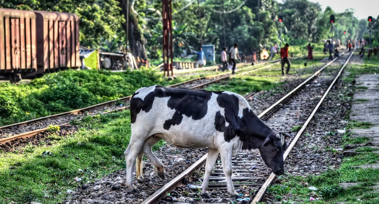 Rail Crossing