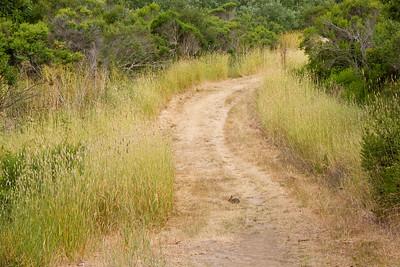 Path Chabot Park