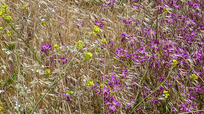 Wildflowers Grasses